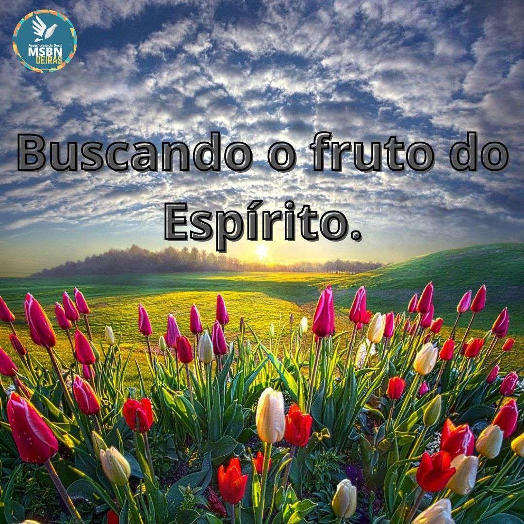 BUSCANDO O FRUTO DO ESPÍRITO | Rose Oliveira